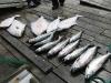 fishing-port-renfrew-british-columbia-canada-viciousfishcharter-009