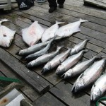 fishing port renfrew british columbia Canada  viciousfishcharter 009