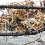 sportfishing for salmon and halibut in port renfrew BC 001
